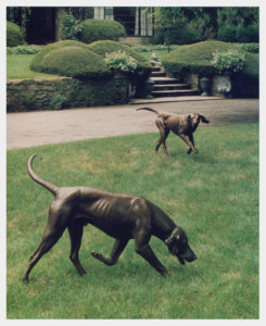 Realistic life-size bronze sculpture of two foxhounds, male hound trotting, nose to ground, and a female foxhound running, two front feet off ground, head up listening.