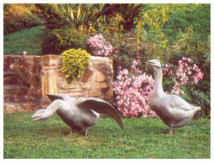 Realistic bronze sculpture life-size of two geese, both honking: one alert, with its head up and wings folded, the other aggressive with wings spread and neck extended
