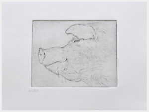 Realistic etching of a close-up of a sleeping pig's head