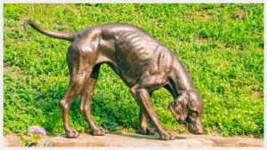 Realistic bronze sculpture life-size of a foxhound in motion, nose sniffing the ground for scent