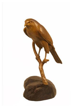 Life size bronze sculpture of a Cooper's hawk