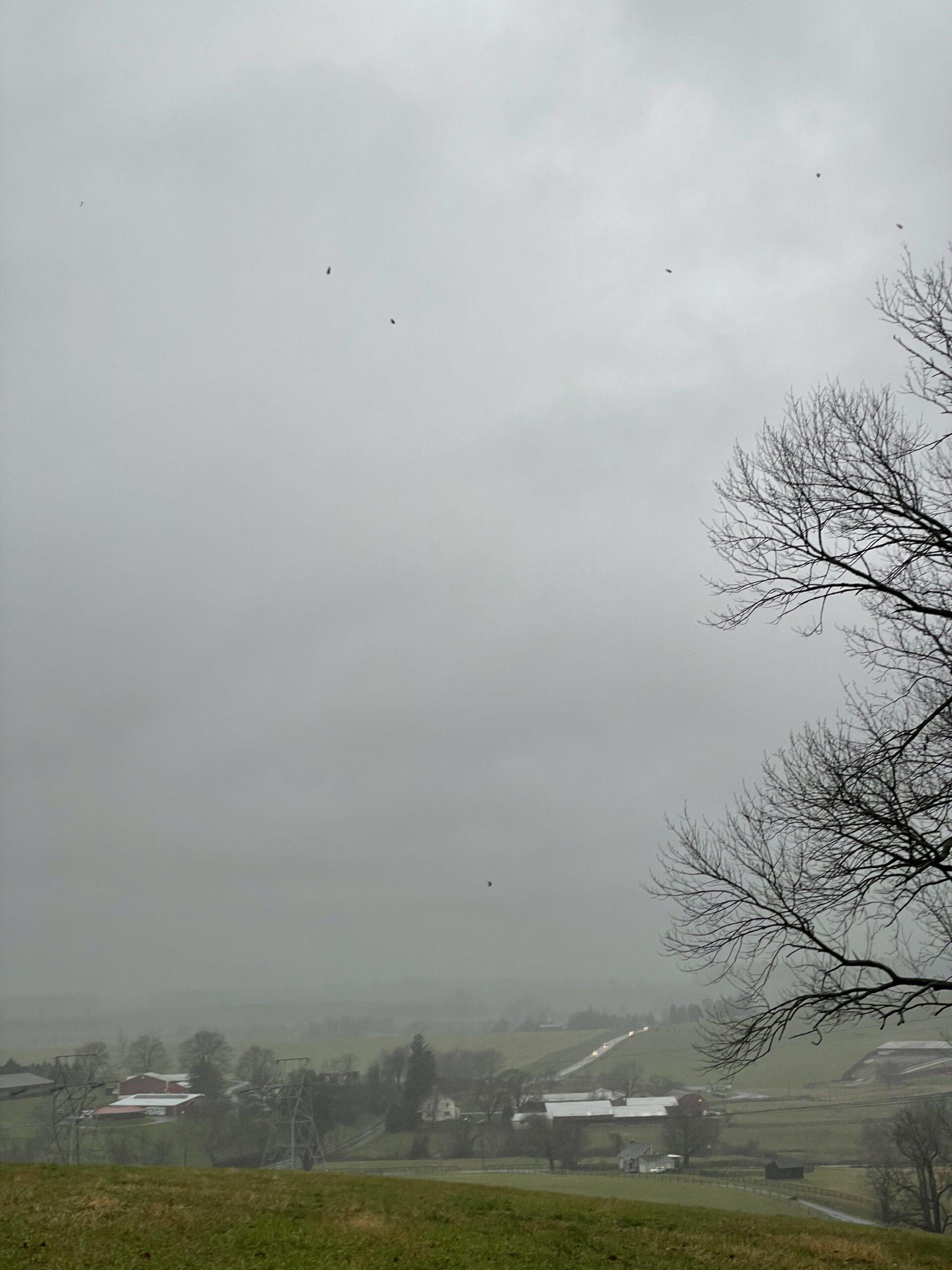 storm driven oak leaves